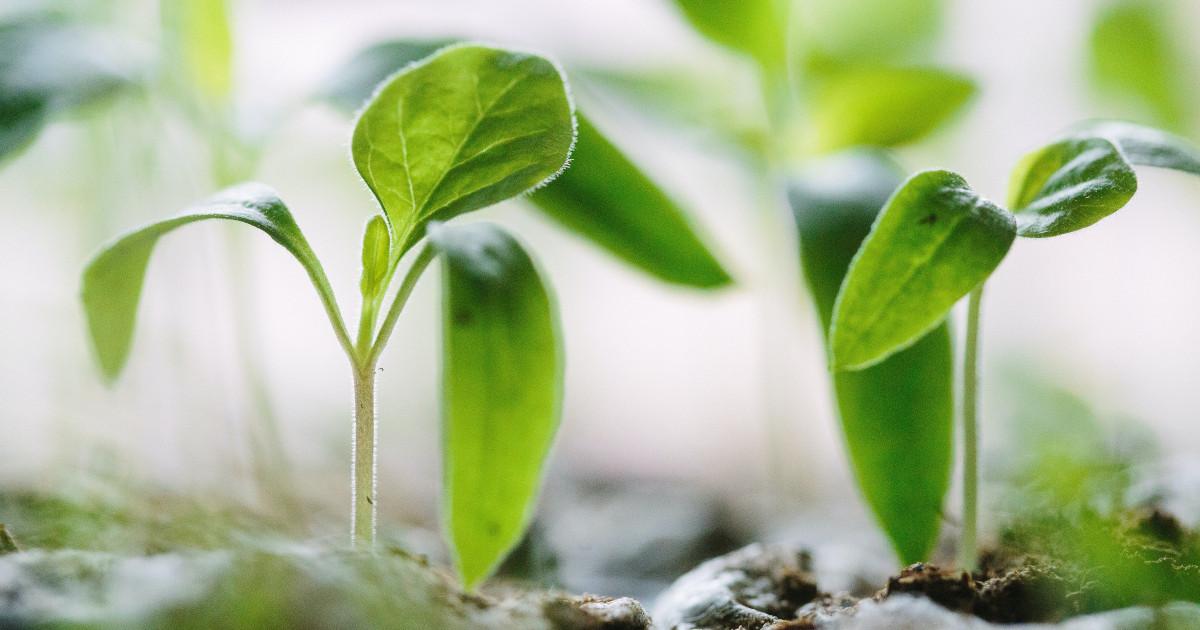 Privilégier les matières naturelles, c'est miser sur le futur