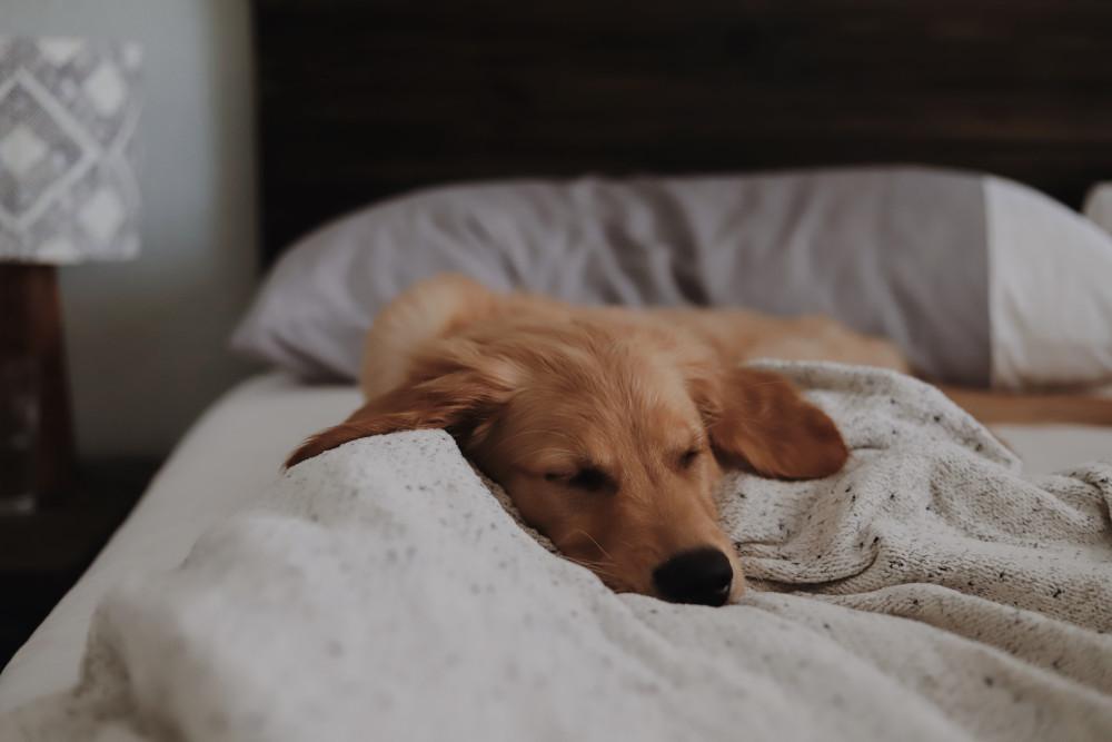 Le lit, cet élément indispensable