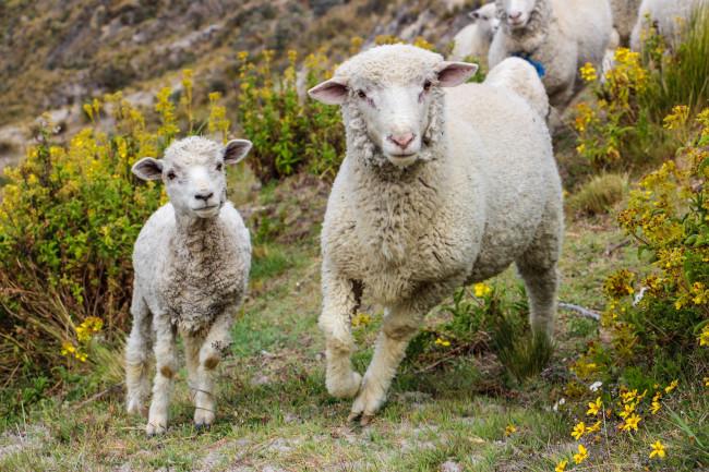 La laine une autre matière naturelle